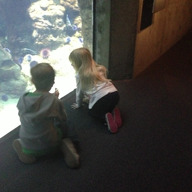 Kids are loving the  Aquarium (at Steinhart Aquarium)