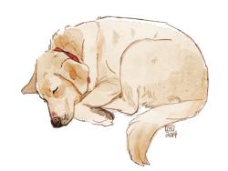 dog pomeranian canine labrador yummys doodles sadie blogging