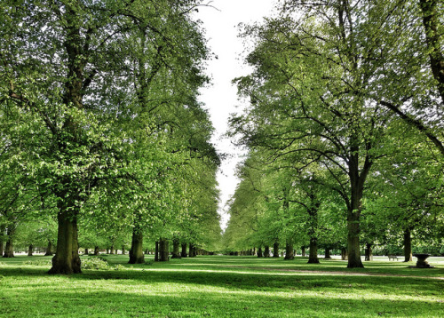 With a #view like this, who needs a #gym? #BushyPark #teddingtongate #teddington #kingston #richmond #twickenham #hamptoncourt #london #greatbritain #uk #trees #avenue on Flickr.