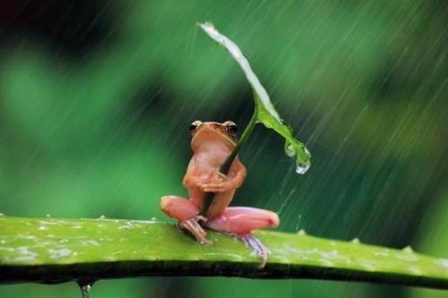 hungariansoul:  koma-mitsu:  Frog manifested umbrella #Lockerz  hahh …lol♥