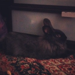 Evil ass buns waking me up at 6am. #wizard #bunbuns