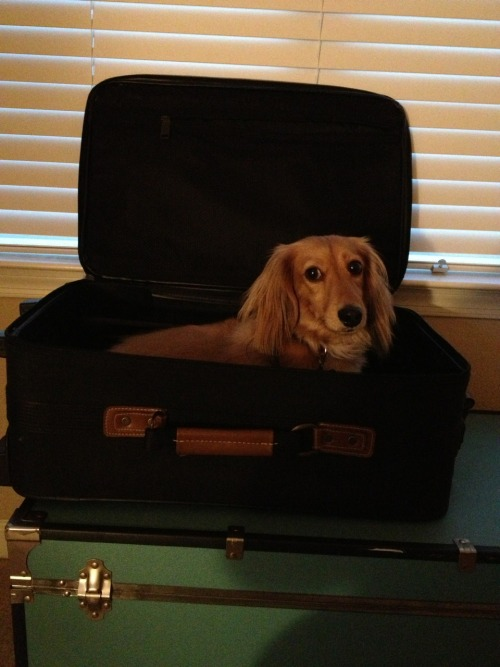 Mommy is going on a trip to Baltimore in a few days. Harry wants to come with, it looks like.