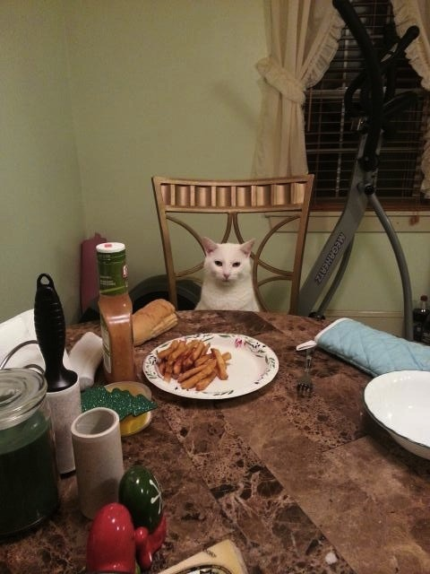 I'm on a dinner date with this cat.
