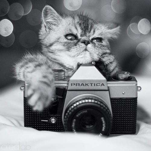 breathingdoesntmeanliving:  #cat #camera #cute #chill