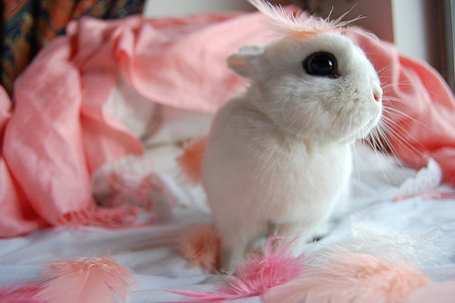 sparqle:  n4ndos:  LOOK AT THE BUNNY IT'S SO TINY AND FLUFFY AND IT'S EYE OMG IT'S HUGE AND IT HAS A LITTLE FEATHER ON ITS HEAD AW  OMG AW