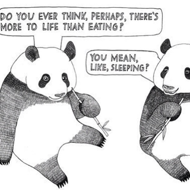 What goes through my mind on the daily. #philosophical #pandas #eating #sleeping #nothingelse #lazy #ohwell