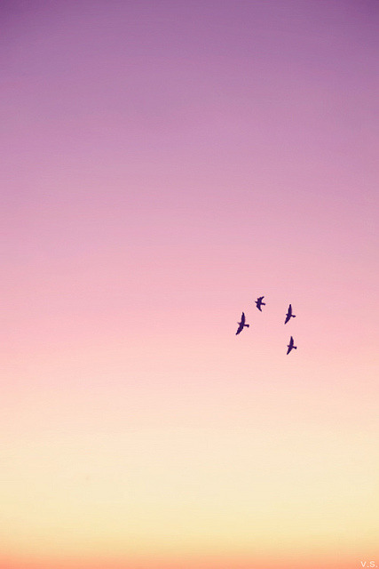laughitout-v:  Birds in flight at sunset on Flickr.