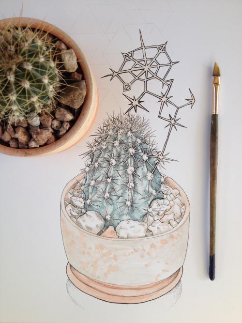 Cactus, Step 2