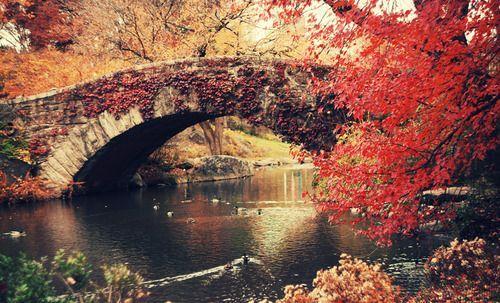 Autumn - Central Park, New York