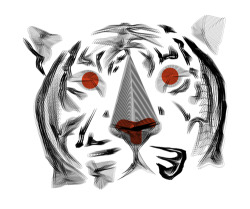 giudit:  Moirè Tiger