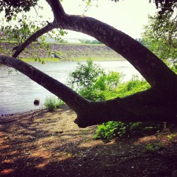 New thinking place.  (at Lehigh River)