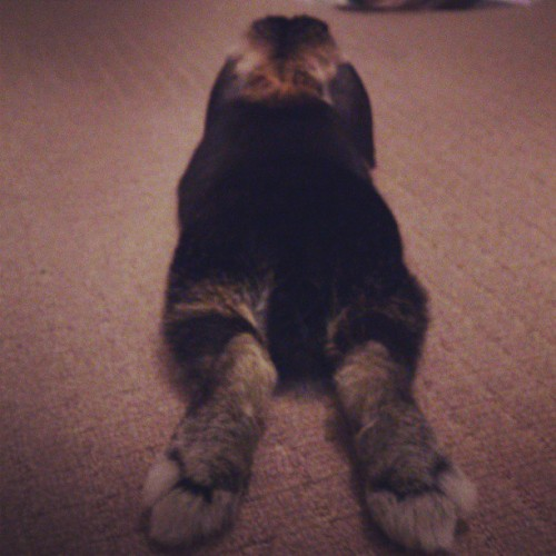 Stretched out bunbun