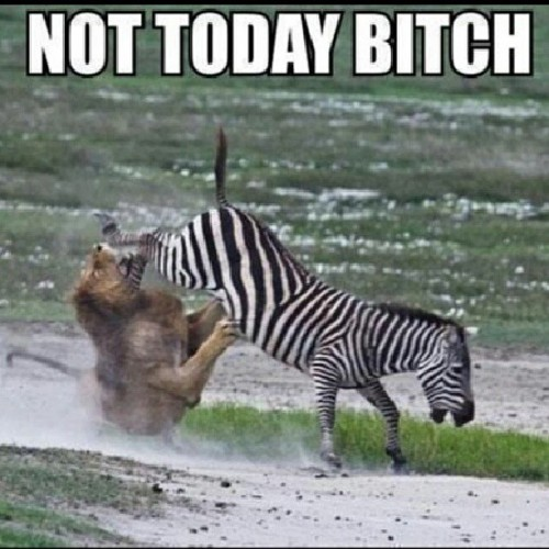 That zebra is about that life