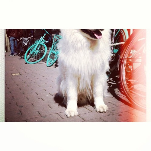 #dog #pet #dogstagtram #white