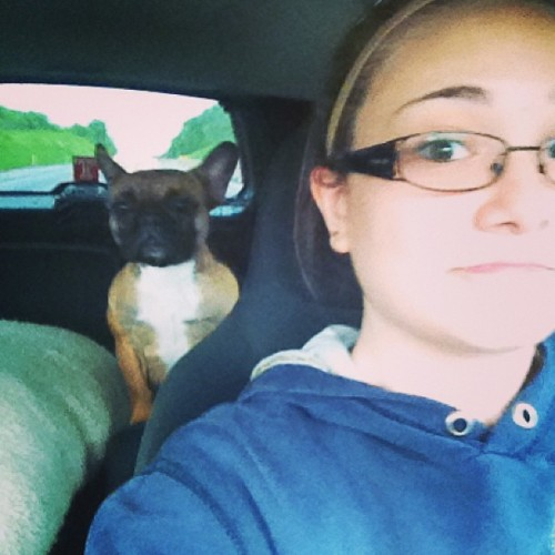 Kloe was curious what was going on while I was driving. #frenchbulldog #cute #puppy #dog #girl #notsafedriving #peekaboo (at Pennsylvania Turnpike)