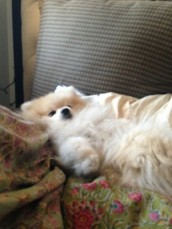 queennubian:  tommypom:   I am NOT moving.   gpoy