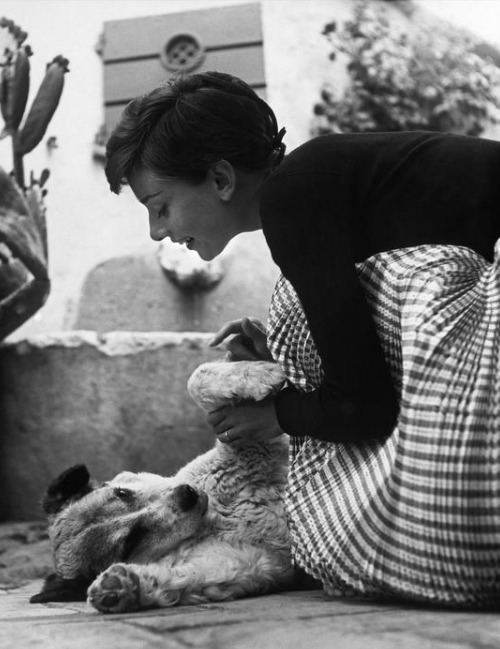 The lovely Audrey Hepburn plays with a dog on her honeymoon in Switzerland, 1954.