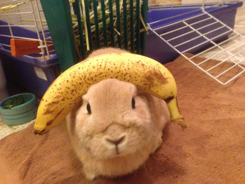 stuffonmyrabbit:  Banana