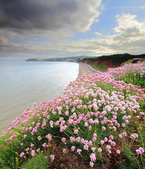 evysinspirations:  Evening flowers by James ~ Anderson on Flickr. Dawlish, Devon, England, UK