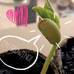The thoughts of a green-bean sprout. 😉 #green #organic #veggie #love #ABeautifulMess (at Casa de Blanco)