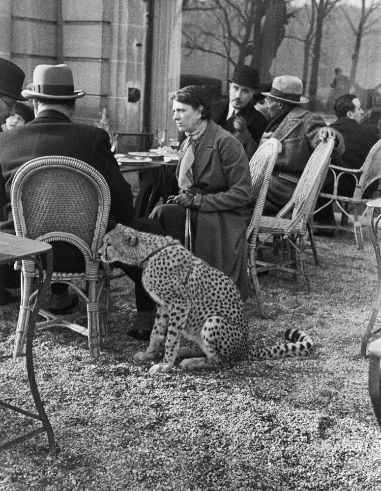 Woman sitting with her pet ocelot having tea at a Bois de Boulogne cafe, Paris, 1963 See more photos here (Alfred Eisenstaedt—TIme & Life Pictures/Getty Images) (via life:)
