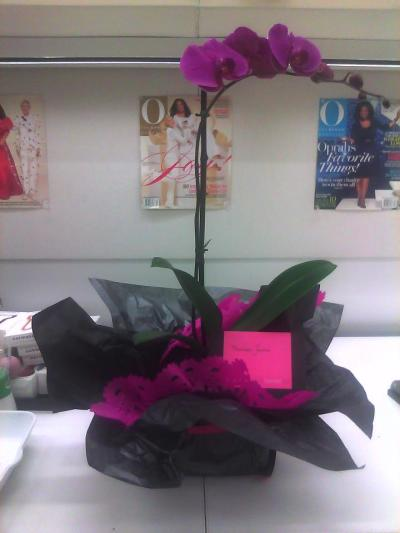 A floral delivery pour moi? Loving this beautiful orchid from Ovando. Their floral arrangements are always so special. Thank you! xoxo  Be sure to check out  Ovando in O Magazine's February issue! Wouldn't mind getting that floral arrangement for Valentine's Day this year ;)   O!