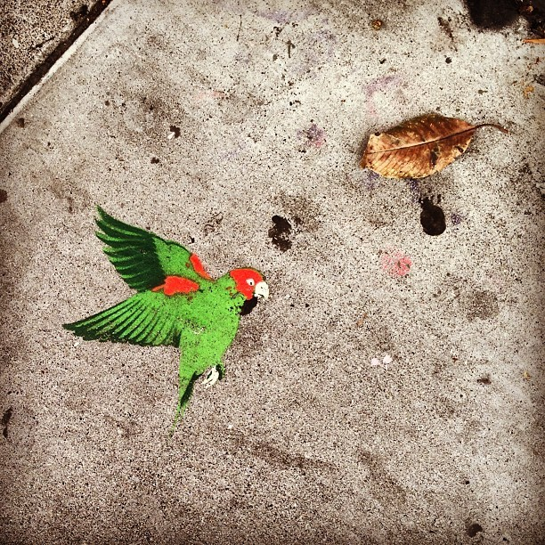 🍂 #streetart #bird #stencilart #sidewalk #sanfrancisco #missiondistrict  (at Radio Havana Social Club)
