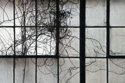 robdobi:  Tangled Vines, Factory, 2013