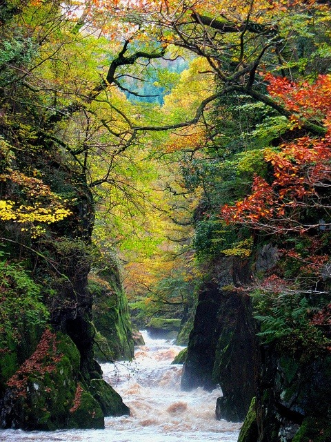 The Fairy Glen Gorge, Conwy River, Wales photo via igor