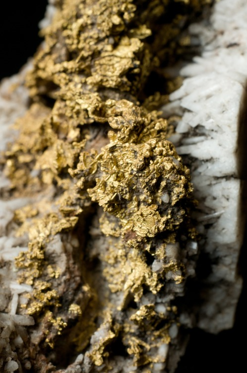 "scinerds:  Earthquakes Can Create Gold Deposits in the Blink of an Eye A new study by Australian geologists has shown that over 80% the world's commercial gold deposits were generated in a flash process, the result of depressurizing earthquakes that rapidly converted mineral-rich fluids into precious veins of gold. The process is called flash vaporization. Deep below the Earth's crust, at depths ranging from three to 18 miles (5-30 km), fluid-filled fault cavities are subject to extreme temperatures and pressure. These fluids are rich in dissolved substances like gold and silicate minerals. But for those deposits located near fault lines, an earthquake can create a dramatic drop in pressure which forces the fluid to expand to as much as 130,000 times its former size — and in the blink of an eye. The researchers, a team consisting of Dion Weatherley and Richard Henley, found that this depressurization process causes trapped fluids to expand to a very low-density vapor. This 'flash' effect results in the rapid deposition of silica, along with gold-enriched quartz veins. From New Scientist:   The fluid cannot get from the surrounding rock into the hole fast enough to fill the void, Henley says, so pressure drops from 3000 times atmospheric pressure to pressures almost the same as those at Earth's surface in an instant. The nearby fluid flash-vaporises as a result – and any minerals it contains are deposited as it does. Later, incoming fluid dissolves some of the minerals, but the less-soluble ones, including gold, accumulate as more episodes of quake-driven flash deposition occur. ""Large quantities of gold may be deposited in only a few hundred thousand years,"" says Weatherley – a brief interval by geological standards. ""Each event drops a little more gold,"" adds Henley. ""You can see it microscopically, tiny layer after tiny layer. It just builds up.""  Read the entire study at Nature Geoscience. More at Nature News and New Scientist. Original Article"