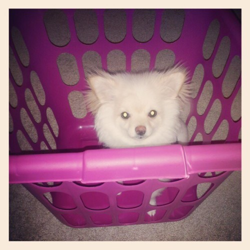 Lol Leo inside laundry basket
