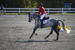 rad-ical:  Canter Fair Hill International