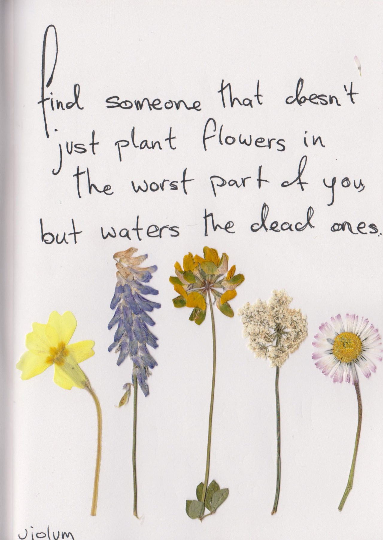 find someone that doesn't just plant flowers in the worst part of you, but waters the dead ones- violum