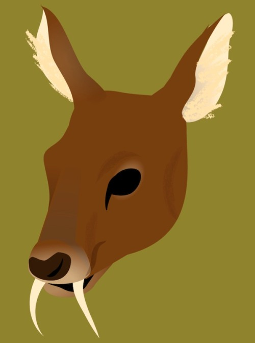 The internet loves these fanged deer but I've never figured out what to do with them.