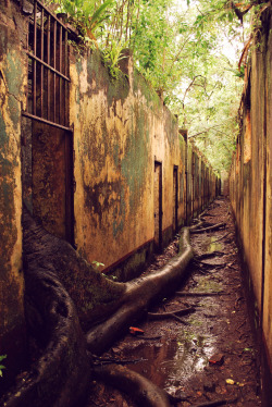 touchdisky:  The abandoned prison complex on Isle St. Joseph, French Guiana, France by Journey Latin America