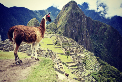 Machu Picchu is absolutely breathtaking.