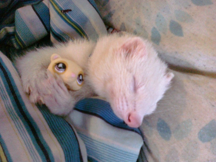 magicalnaturetour:  Cutest ferret evah by ~WolffangMireiyu