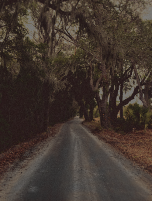 intracoastal-wanderings:  Blackground RoadJohns Island, SC