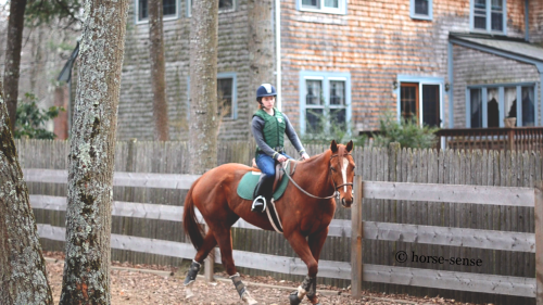 "Shutterbug - ""Lyric""6yo ottb thoroughbred, seven months off the track."