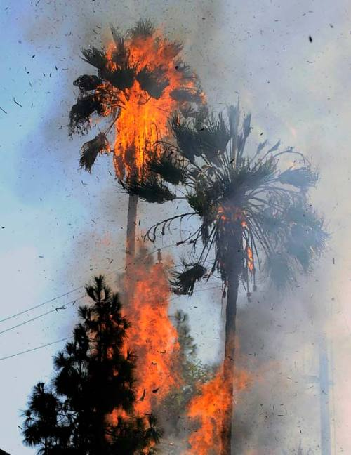robotcosmonaut:  Los Angeles Is Burning  LA really changed this palm tree.