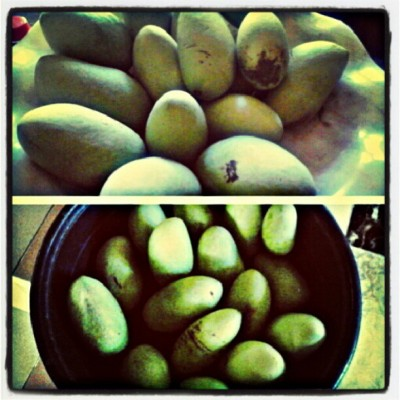 Green mangoes! :)) #harvesttime #happiness