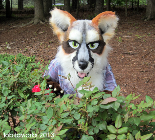 Why, I do believe there is a fox in the roses.Gray fox is now available for straight sale on Etsy: https://www.etsy.com/listing/150329147/gray-fox-partial-fursuitDon't miss this opportunity to have a well-made and attractive costume for the summer cons :D