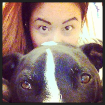 Brown eyes 🐶 #staffi #boo #woof #dogs #puppy #love #eyebrows