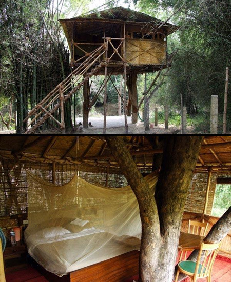 "As someone once said, ""what's never not awesome? TREEHOUSES!""  Rebecca Muir, the protagonist of Justina Chen's Return to Me, would agree. Rebecca has an eye for architecture but the girl has a thing for treehouses.  What could be better than one of the above, a day off, a new book a stack of new books, summertime, and possibly a cookie? Nothing, nothing at all.  Tarzan's Treehouse 