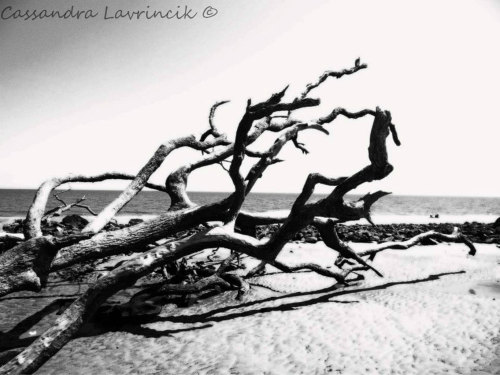 Nature Art Photography- 8x8  Black & White Driftwood by ThePrivvyPineapple (16.00 USD) black and white, art photography, fine art photography, driftwood, modern art