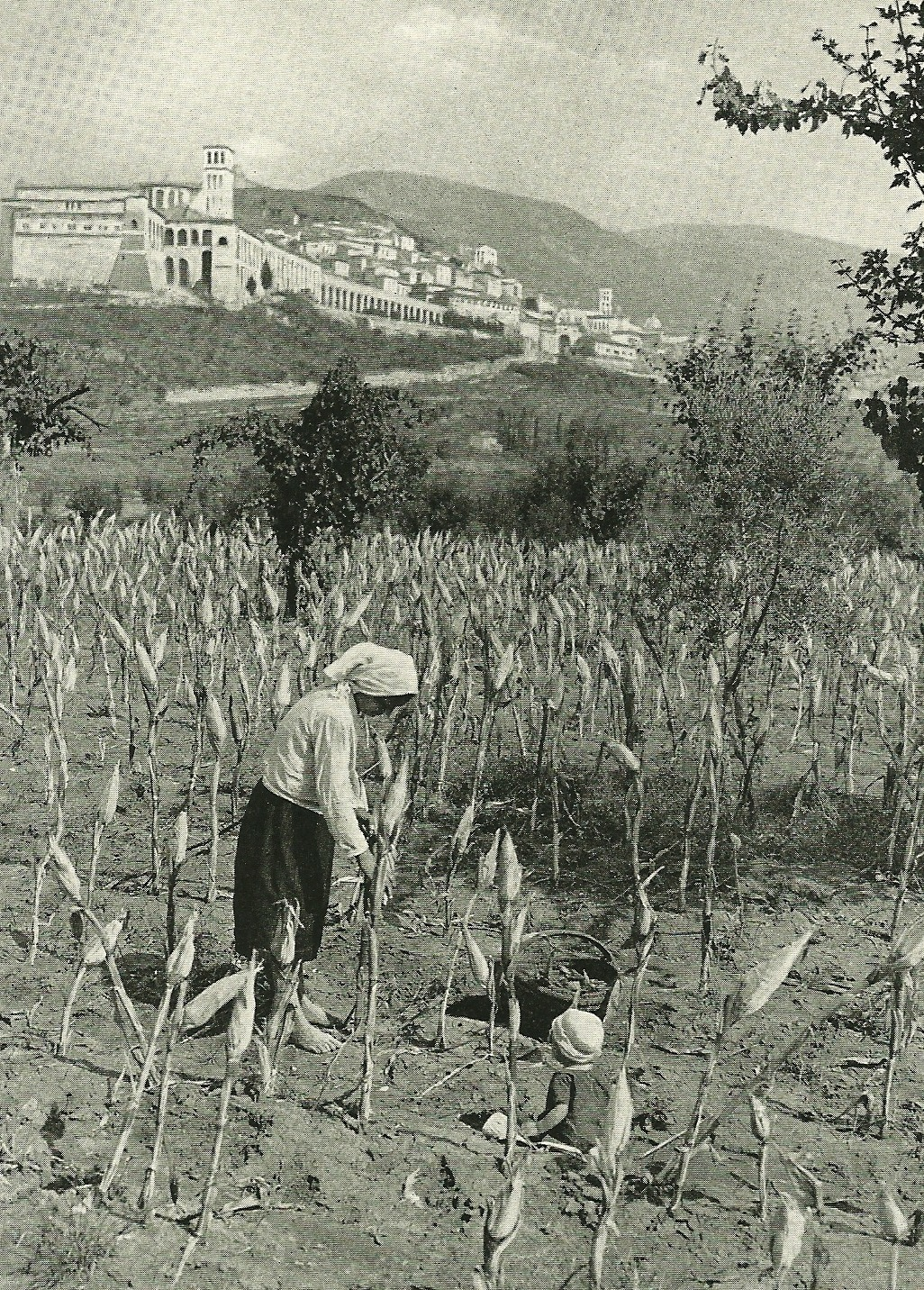 Barefoot mother harvests corn below the white walls of Assisi, Greece National Geographic | March 1940