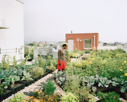 thephotographicimage:  © Rob Stephenson. Urban Agriculture series. Seeds to Feed Rooftop Farm.