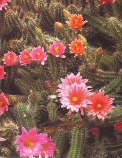 cac-tus:  Book: The complete book of cacti & succulents by Terry HewittPhotography source: Peter Anderson