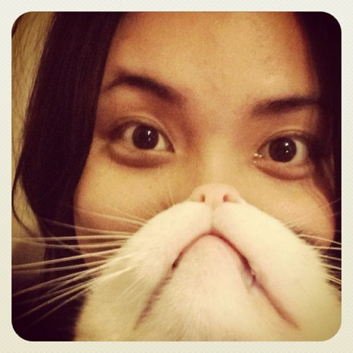 Thank you Internet for showing me what a cat beard is