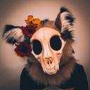 flowerskullcat